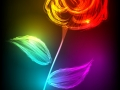 Beautiful rose made of colorful light