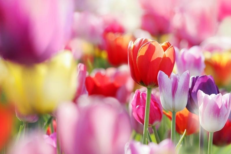 картинки на экран рабочего стола цветы № 523498 загрузить