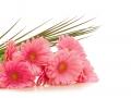 Blumenstrauss,Gerbera