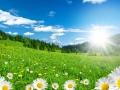 Frühling in den Alpen mit Margeriten und Blumenwiese