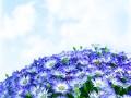 Floral daisy border