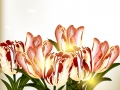 Cute background with tulips