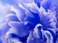 abstract blue flower background