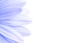 lavender petals highkey isolated