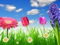 Fresh spring grass with flower on the blue sky