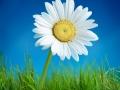 flower on grass
