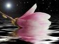 Magnolien night