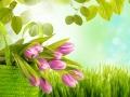 tulpen und wiese