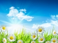 Daisies and grass with bright blue sky