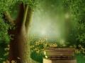 Książki na leśnej polanie
