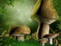Baśniowa polana z grzybami