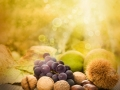 Set of autumn fruit