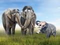 Elefanten Familienglück