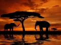 Silhouette two elephants in the sunset
