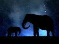 Silhouette elephants in the night sky