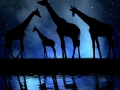 herd of giraffes in the night sky
