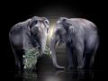 Elefanten B-Day