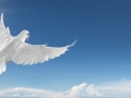 white dove in the sky