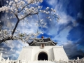 chiang kai shek memorial hall in taiwan with nice sakura flower