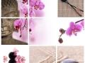 Collage Bouddha zen orchidée rose
