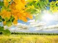 Weinkultur in der Pfalz: Wingert an sonnigem Herbsttag
