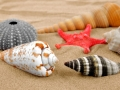starfish and shells on the sand