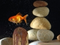 goldfish in aquarium over well-arranged zen