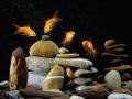goldfish in aquarium  zen stone and nice bubbles