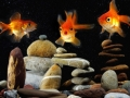 goldfish in aquarium over  zen stone and nice bubbles