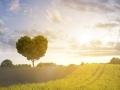 Eiche Herzform Liebe zur Landwirtschaft